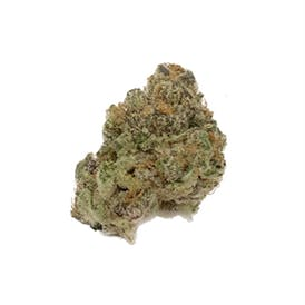 Mimosa (Sativa)