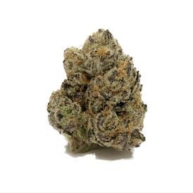 Platinum Purple Candy (Hybird)